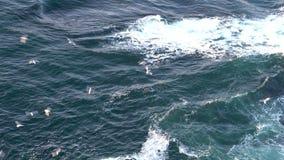 Seagulls εν πλω στην Ισλανδία φιλμ μικρού μήκους