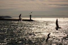 Seagulls ηλιοβασιλέματος της Ιστανμπούλ χρονικά θάλασσα και Στοκ Εικόνες