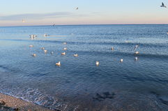 seagulls θάλασσα Στοκ Εικόνες