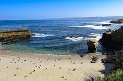 Seagulls διάταξη κατά μήκος της παραλίας παιδιών ` s στον όρμο της Λα Χόγια στο Σαν Ντιέγκο, Καλιφόρνια Στοκ φωτογραφία με δικαίωμα ελεύθερης χρήσης