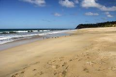 Seagulls και εγκαταλειμμένη αμμώδης παραλία Στοκ εικόνες με δικαίωμα ελεύθερης χρήσης