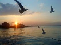 Seagulls και θάλασσα Στοκ εικόνες με δικαίωμα ελεύθερης χρήσης