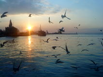 Seagulls και θάλασσα Στοκ Φωτογραφίες