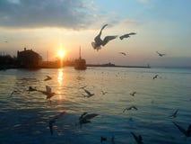 Seagulls και θάλασσα Στοκ φωτογραφίες με δικαίωμα ελεύθερης χρήσης