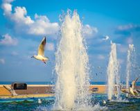 Seagulls και πηγές νερού Στοκ Εικόνα