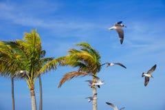 Seagulls και φοίνικες στοκ εικόνες με δικαίωμα ελεύθερης χρήσης