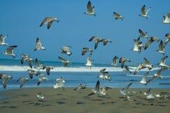 seagulls κοπαδιών Στοκ φωτογραφίες με δικαίωμα ελεύθερης χρήσης
