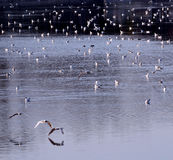 seagulls κοπαδιών Στοκ φωτογραφία με δικαίωμα ελεύθερης χρήσης