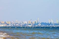 Seagulls κοπαδιών κορμοράνοι που πετούν πέρα από τη θάλασσα, λιμένας, υπόβαθρο πόλεων Στοκ φωτογραφία με δικαίωμα ελεύθερης χρήσης