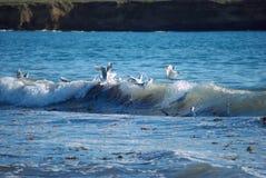 seagulls κύματα Στοκ φωτογραφία με δικαίωμα ελεύθερης χρήσης