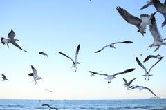 Seagulls Μαϊάμι Μπιτς στοκ εικόνα