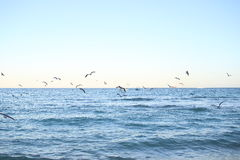 Seagulls Μαϊάμι Μπιτς στοκ φωτογραφία με δικαίωμα ελεύθερης χρήσης