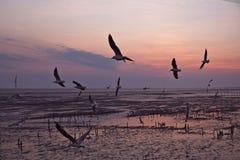 Seagulls μεταναστεύουν από τη Σιβηρία, τη Μογγολία, το Θιβέτ και την Κίνα για να κτυπήσουν το PU, Samut Prakan Ταϊλάνδη στοκ φωτογραφία