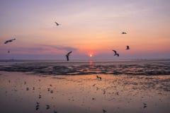 Seagulls μεταναστεύουν από τη Σιβηρία, τη Μογγολία, το Θιβέτ και την Κίνα για να κτυπήσουν το PU, Samut Prakan Ταϊλάνδη στοκ φωτογραφία με δικαίωμα ελεύθερης χρήσης