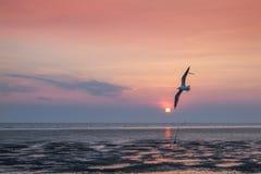 Seagulls μεταναστεύουν από τη Σιβηρία, τη Μογγολία, το Θιβέτ και την Κίνα για να κτυπήσουν το PU, Samut Prakan Ταϊλάνδη στοκ φωτογραφίες