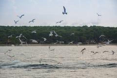 seagulls μυγών Στοκ εικόνα με δικαίωμα ελεύθερης χρήσης