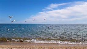 Seagulls μύγα πέρα από την ακτή φιλμ μικρού μήκους