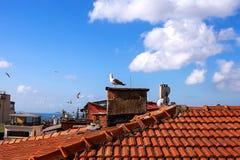 Seagulls μύγα πέρα από τις στέγες της πόλης της Ιστανμπούλ Τα πουλιά κάθονται σε μια κόκκινη στέγη κεραμιδιών Στα πλαίσια των WI  Στοκ εικόνα με δικαίωμα ελεύθερης χρήσης
