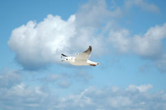 seagulls ουρανός Στοκ Φωτογραφίες