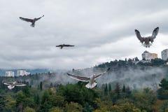 Seagulls πέρα από τα δέντρα Στοκ εικόνα με δικαίωμα ελεύθερης χρήσης