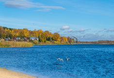Seagulls πέρα από τον ποταμό Στοκ φωτογραφία με δικαίωμα ελεύθερης χρήσης