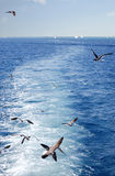Seagulls πέταγμα και σκάφη Στοκ Φωτογραφίες