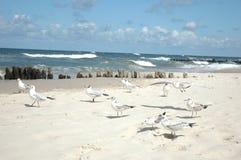seagulls παραλιών Στοκ φωτογραφίες με δικαίωμα ελεύθερης χρήσης