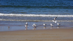seagulls παραλιών Στοκ Εικόνα