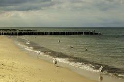 Seagulls περπάτημα Στοκ Εικόνα