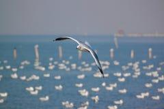 seagulls πετούν ενάντια στην παραλία, ζωική άγρια φύση Στοκ Φωτογραφία