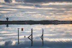 Seagulls που εγκαθιστούν στους πόλους σε crosby Στοκ εικόνες με δικαίωμα ελεύθερης χρήσης