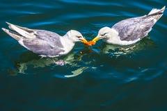 Seagulls που δεν μοιράζονται Στοκ φωτογραφία με δικαίωμα ελεύθερης χρήσης