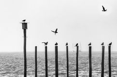 Seagulls που κάθονται στις ακτίνες κοντά στη θάλασσα Στοκ Φωτογραφίες