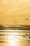 Seagulls που παίρνουν στον αέρα από μια παραλία κατά τη διάρκεια του ηλιοβασιλέματος Στοκ εικόνες με δικαίωμα ελεύθερης χρήσης