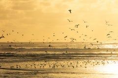 Seagulls που παίρνουν στον αέρα από μια παραλία κατά τη διάρκεια του ηλιοβασιλέματος Στοκ φωτογραφίες με δικαίωμα ελεύθερης χρήσης