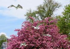 Seagulls που πετούν πέρα από ένα πάρκο στο Ρόουντ Άιλαντ Στοκ φωτογραφίες με δικαίωμα ελεύθερης χρήσης