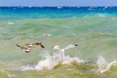 Seagulls που πετούν πέρα από τη θάλασσα Στοκ φωτογραφία με δικαίωμα ελεύθερης χρήσης