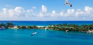 Seagulls που πετούν πέρα από το νερό σε Nassau, Μπαχάμες Στοκ Εικόνες