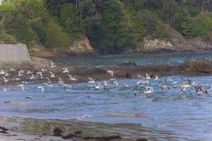 Seagulls που πετούν στη θάλασσα στοκ εικόνες