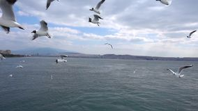 Seagulls που πετούν στη νεφελώδη ημέρα ουρανού φιλμ μικρού μήκους