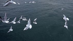 Seagulls που πετούν στη νεφελώδη ημέρα ουρανού απόθεμα βίντεο