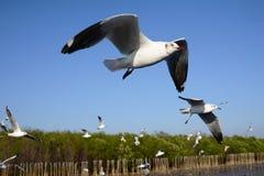 Seagulls που πετούν στο μπλε ουρανό Στοκ εικόνα με δικαίωμα ελεύθερης χρήσης