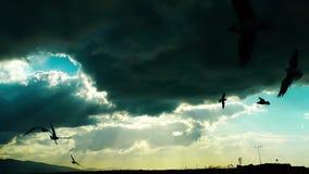 Seagulls που πετούν τη σκιαγραφία απόθεμα βίντεο