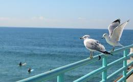 Seagulls που προσέχουν τα surfers στο Μανχάταν Μπιτς Λος Άντζελες στοκ φωτογραφία με δικαίωμα ελεύθερης χρήσης