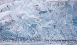 Seagulls που ταΐζουν κοντά στον τοίχο παγετώνων Στοκ φωτογραφία με δικαίωμα ελεύθερης χρήσης