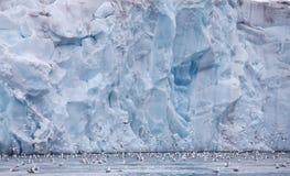 Seagulls που ταΐζουν κοντά στον τοίχο παγετώνων Στοκ εικόνες με δικαίωμα ελεύθερης χρήσης