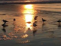 Seagulls που τρέχουν τα κύματα στοκ εικόνες
