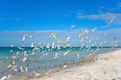 seagulls πτήσης λήψη Στοκ φωτογραφίες με δικαίωμα ελεύθερης χρήσης