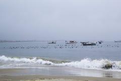 Seagulls σε μια νεφελώδη ημέρα Στοκ Φωτογραφίες