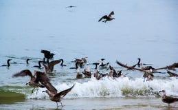 Seagulls σε μια νεφελώδη ημέρα Στοκ Φωτογραφία